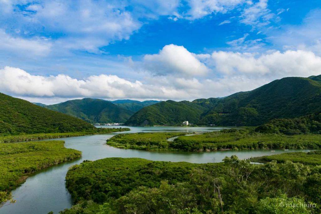 奄美大島 マングローブ原生林写真